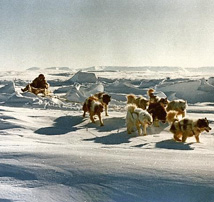 Dog-Sled Team
